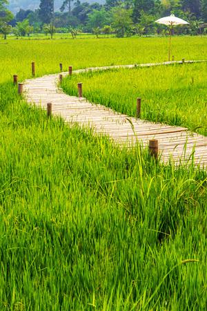 Green rice field with bamboo bridge and white unbrella.