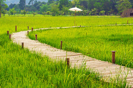 Bamboo bridge across green rice farm with tree line in the background.