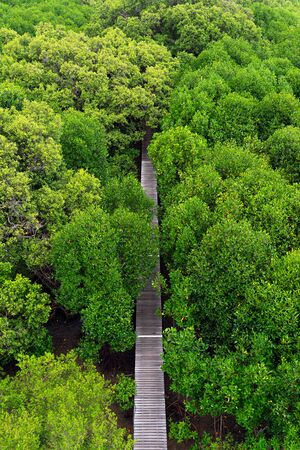 Aerial view of wooden elevated walkway in green mangrove forest in Thailand. Stok Fotoğraf