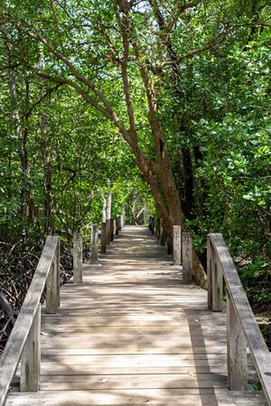 Small wooden bridge in green mangrove forest in Rayong, Thailand.