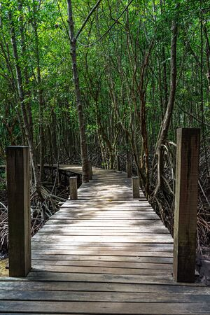 Light and shadow on wooden walkway in green mangrove forest in Rayong, Thailand. Фото со стока