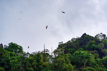 Bats flying in the cloudy sky over dark green forest.