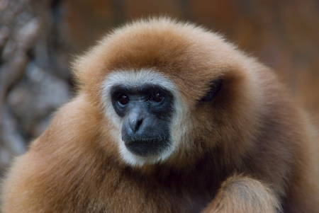 Portrait of a sad monkey in the zoo cage