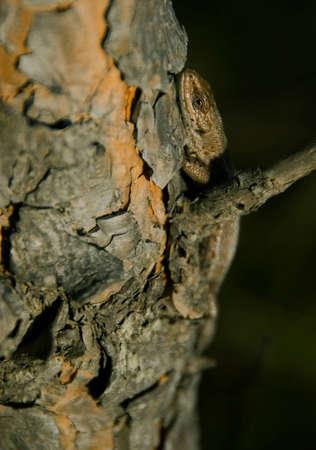 Lizard sitting on a tree