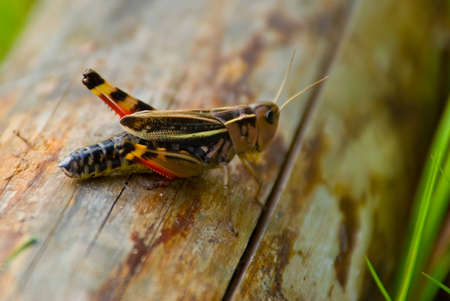 A locust sat on a piece of wood