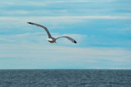 Flying seagull against sky with ocean in the background