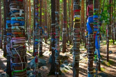 Shaman trees with colored ribbons in the Baikal lake, Russia. Stock Photo