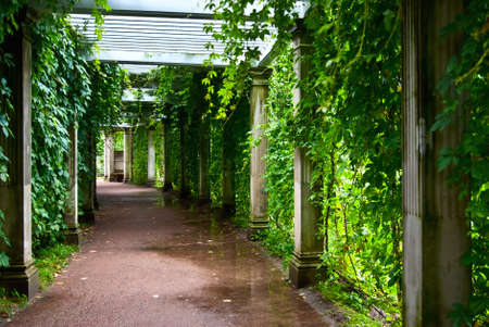 Pathway through overgrown with leaves pergola