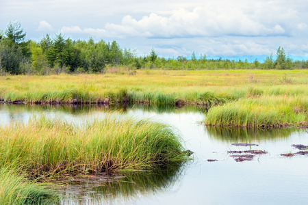 Landscape with marsh overgrown sedge, Russia