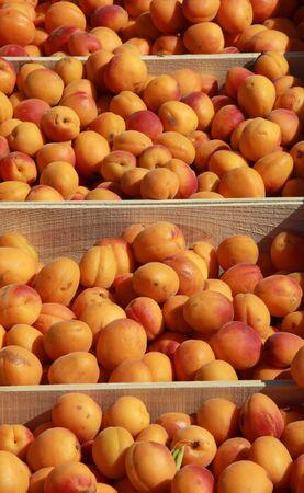 pome: Apricots on Farmers Market Stock Photo