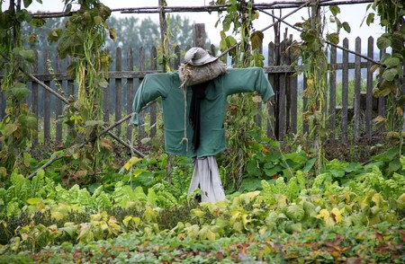 picket: old scarecrow in the cottage garden front of a wooden picket fence