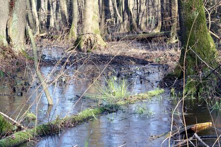 unaffected: Forest with mud and water in winter