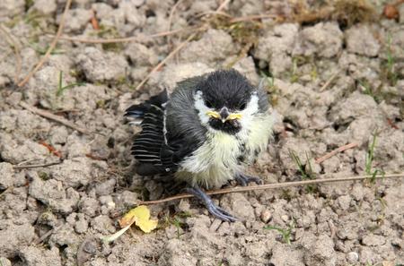 young bird: Small young bird in closeup Stock Photo