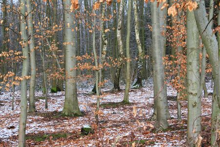 wintry forest Stock Photo