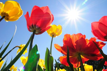 sun flower: Flowers in sunshine Stock Photo