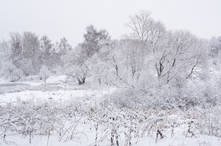 underbrush: Winter landscape with trees and bushes covered in thick snow on a gloomy day.