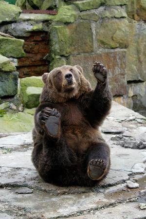 발을 흔들며 재미있는 포즈로 장난 친절한 곰.