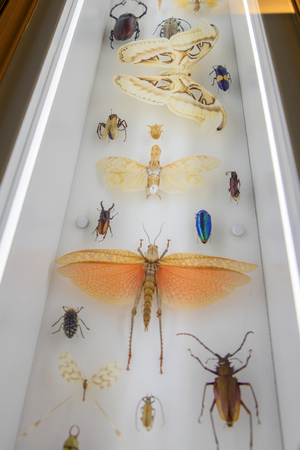 spot the difference: Insect Collection