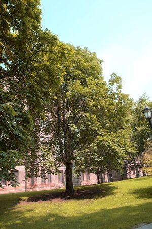 walking zone: Toronto City Trees Stock Photo