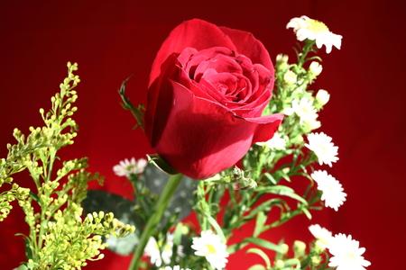 red rose bokeh: Rose and flower bokeh Stock Photo