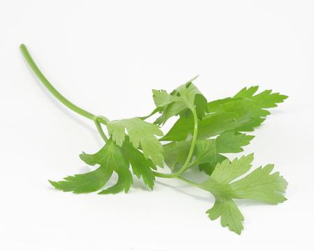 parsley: Italian Parsley Stock Photo