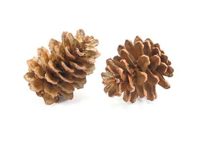christmas element: Pine Cone