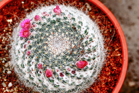 cactus flower: Cactus thorny plant with flower in garden outdoor day light Stock Photo