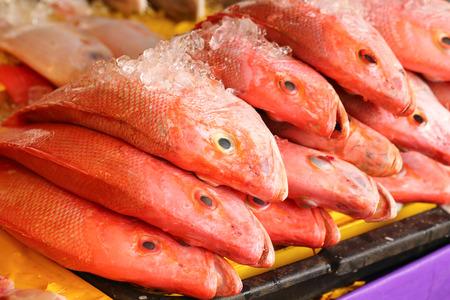 Fresca pescado pargo rojo en el mercado de pescado en hielo Foto de archivo - 49905768