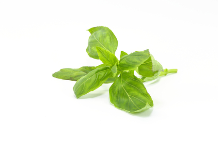 basil: Sweet Basil Leaf Green on white background