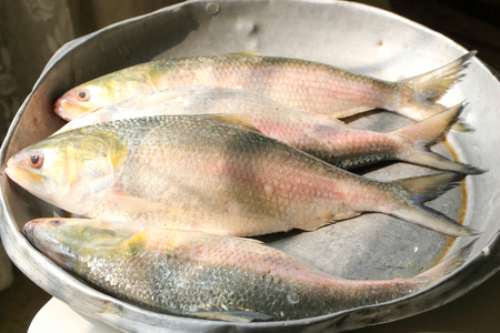 auspicious occasions: Ilish Hilsa Fish fresh on a try at market Stock Photo