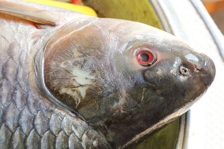 carb: Rohu carb fish head fresh eye scale