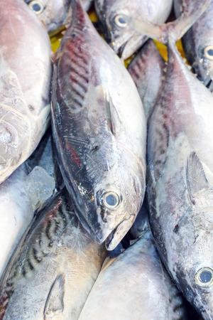 thunnus: Fresh Small Tuna Fish on ice at weekend fishers market Stock Photo