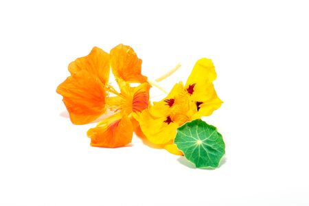 Nasturtiums Flower edible Colorful on white background Stock Photo