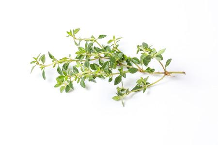 Lemon Thyme Herb fragrant seasoning on white background