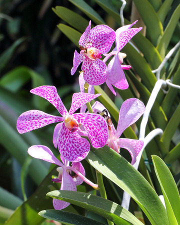 spotted flower: Orchid flower spotted red maroon outdoor daylight