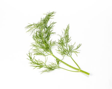 fragrant: Dill green herb fresh fragrant aromatic ingredient on white background Stock Photo