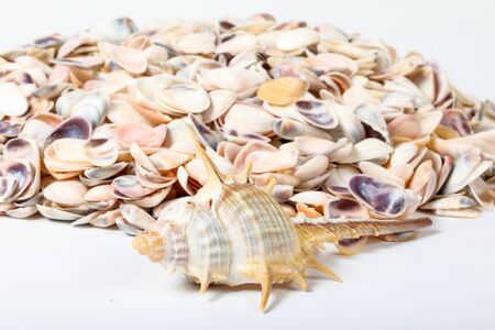 Sea Shell colourful shape variety marine skeleton?