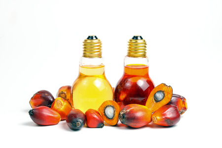 Oil Palm Fruit ripe whole products food bulb bottle