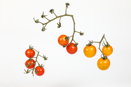 Tomato Fresh Red yellow Ripe with green stem assorted variety