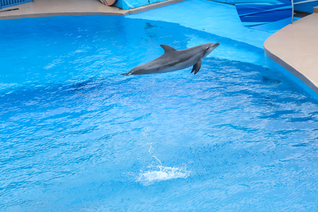 OCEAN PARK, HONG KONG-FEBRUARY 17, 2018 - One of the key attraction of Hong Kong Ocean Park is the amazing sea lion and dolphin show. Wowing both adults and children.