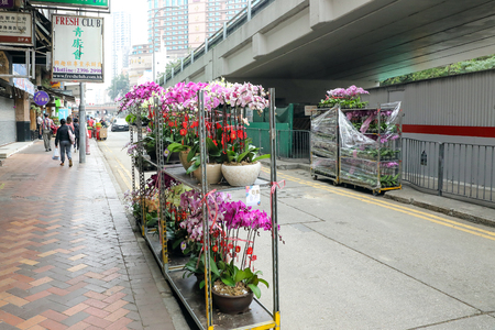 HONG KONG- FEBRUARY 19, 2018- Hong Lok Street, Yau Tsim Mong District, Kowloon were more than 50 plant shops clustered close together for wholesale and retail of flowers and plants 에디토리얼