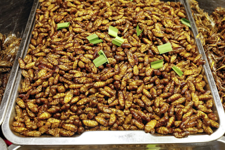Larvie grasshopper bittles various fried insects sold in Thailand night market