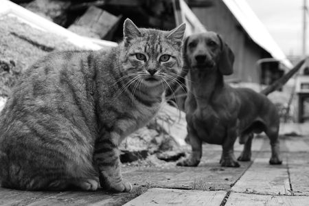 Black & white portrait of a cat, with a dog behind
