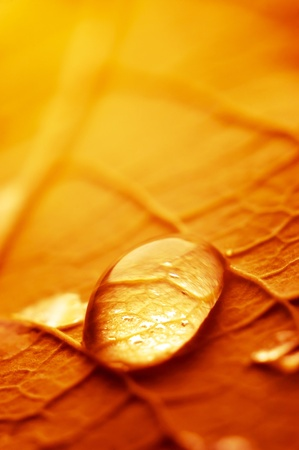 tremendous: Macro photograph of the droplet of water on the autumn leaf. Stock Photo