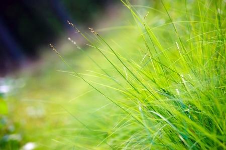 Macro photograph of green grass. Background. Stock Photo