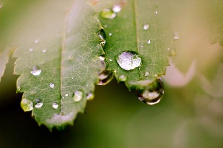 Macro photography of a big water drop.