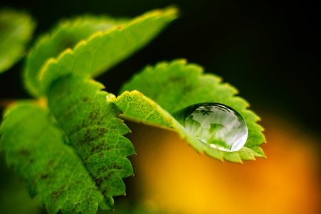 Macro photography. Green leaf with a big water drop.