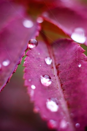 Close up of drops of water on th leaf. Stock Photo