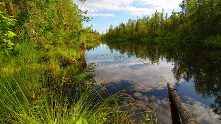Beautiful lake in the wooden forest. photo