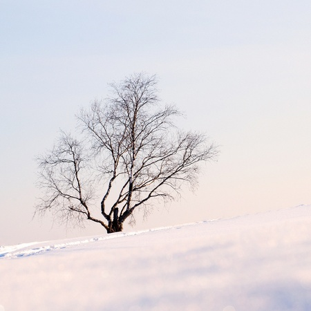 Lonely birch on the snowy slope. Stock Photo